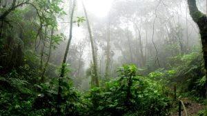 Amazônia,Brasil,Blog do Mesquita