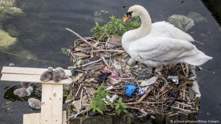 Ambiente & Ecologia,Poluição,Vida Selvagem,Oceanos,Plástico
