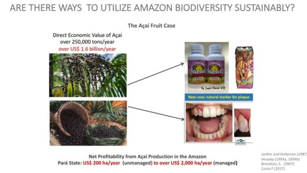 Onyx Lorenzoni,Desmatamento,Amazônia,Ambiente & Ecologia,Economia,Bolsonaro