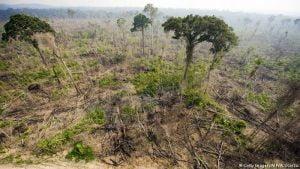Amazônia,Desmatamento,Brasil,Meio Ambiente,Ecologia,Água,Poluição,Aquecimento Global 1