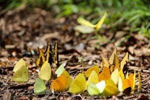 Ecologia,Meio Ambiente,Agro Tóxico,Veneno,Animais,Insetos