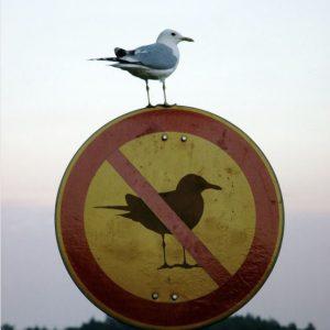 Desobediência Civil,Blog do mesquita