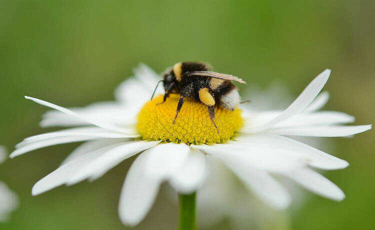 Desaparecimento das abelhas: como evitar?
