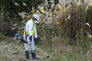 Ambiente,Contaminação Nuclear,Meio Ambiente,Radiação,Saúde,Ecologia,Catástrofes