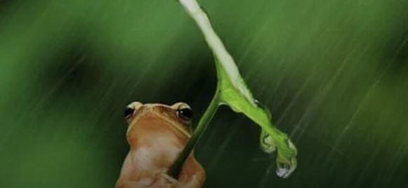 Notícias sobre O erro de achar que a água cai do céu!