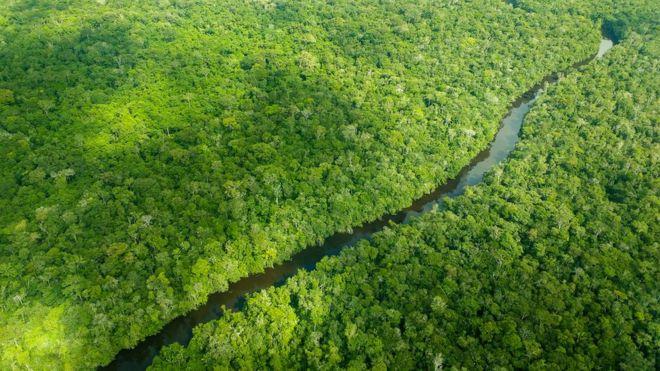 Sustentabilidade,Ecologia,Poluição,Crimes Ambientais,Meio Ambiente,Amazônia,Desmatamento,Brasil