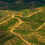 Pecuária,Agricultura,Meio Ambiente,Desmatamento,Poluição,Aquecimento Global,Blog do Mesquita
