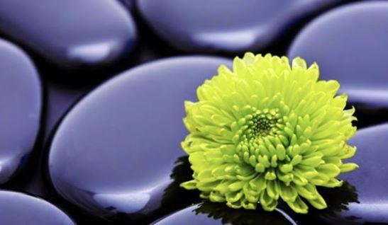 Pedras e Flor,Blog do Mesquita