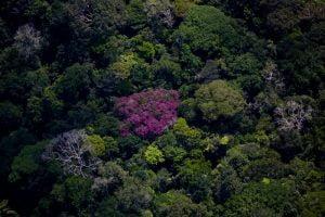 Poluição,Recursos Naturais,Crimes Ambientais,Clima,Aquecimento Global,Ambiente & Ecologia,Brasil,Ecologia,Desmatamento,Amazônia,Blog do Mesquita