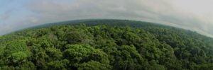 Ambiente,Meio ambiente,Ecologia,Diversidade,Conservação,Biodiversidade,Brasil