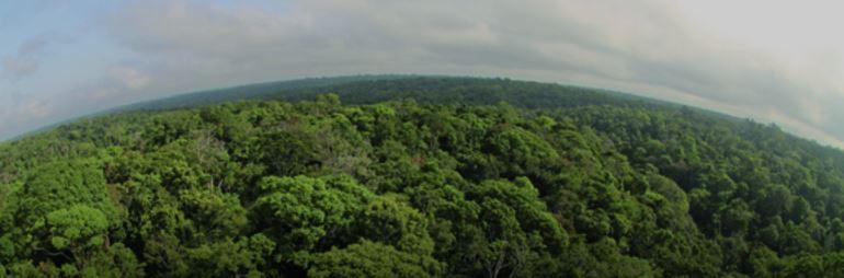 Notícias sobre Medida Provisória avança e ameaça o Código Florestal