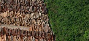 Ambiente,Amazônia,Desmatamento,Ecologia,Meio Ambiente,Natureza,Brasil,Crimes Ambientais,BlogdoMesquita