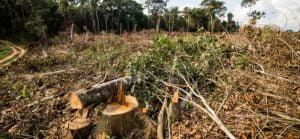 Desmatamento,Meio Ambiente,Ecologia,Natureza,Blog do Mesquita 07