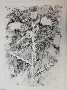 Esteban Senties,Artes Plásticas, Gravuras, Litografía sobre papel algodão, título, flor de cardo, 60 X 80 cm,Blog do Mesquita