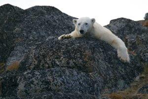 Meio Ambiente,Clima,Aquecimento Global,Ecologia,Fauna,Flora,BlogdoMesquita