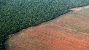 Desmatamento,Amazônia,Ambiente,Blog do Mesquita
