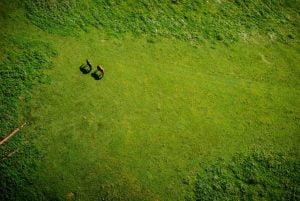 Natureza,Ambiente,Meio Ambientea,Blog do Mesquita 02