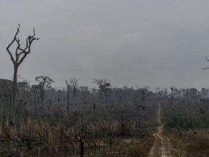 Amazônia,Queimadas,Ambiente,Meio Ambiente,BlogdoMesquita 02