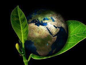Meio Ambiente,Ecologia,Blog do Mesquita 00